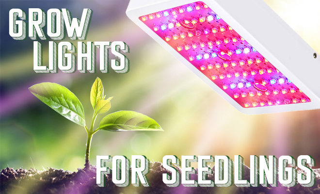 grow lights for seedlings